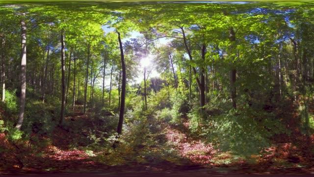 360VR landscape 4k video forest