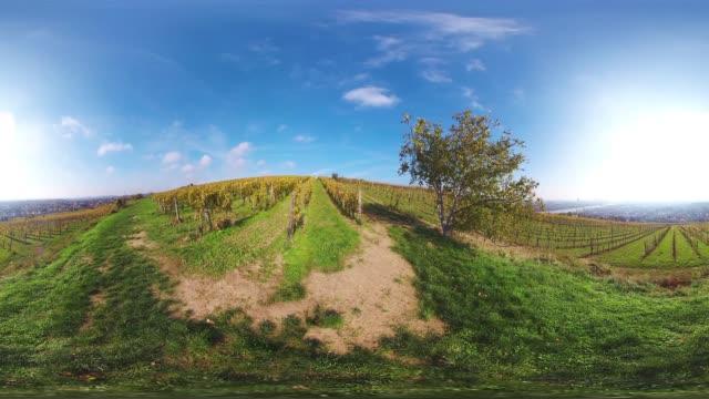 360VR landscape 4K video late autumn in vineyard