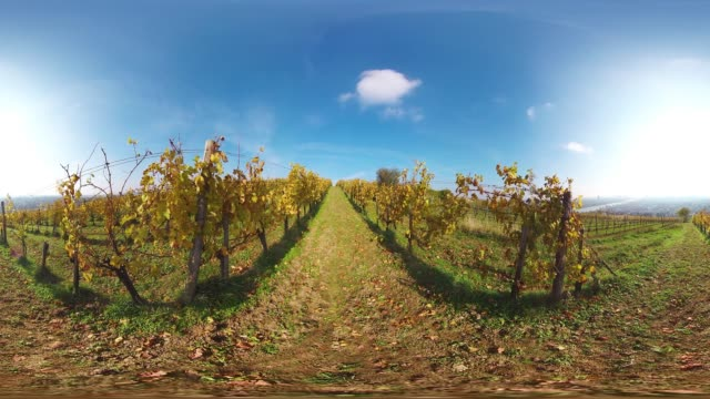 360VR landscape 4K video sunny autumn day in vineyards of vienna