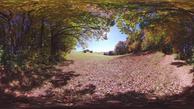 360VR landscape 4k video woodland in autumn