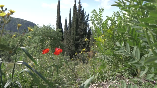 landscape and scenery near sokol tower on a sunny spring day, dunave, croatia, europe - landscape scenery点の映像素材/bロール