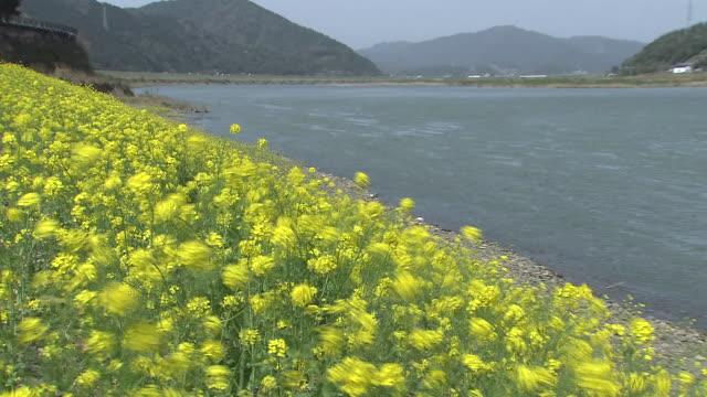 Landscape Around Shimantogawa River, Kochi, Japan