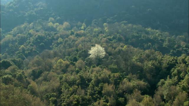 WS ZI Landscape at 'Pindos' mount, Zooming on almond tree / Papigo, Ipiros, Greece