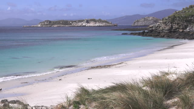 landscape, carcass island, falkland islands - falkland islands stock videos and b-roll footage