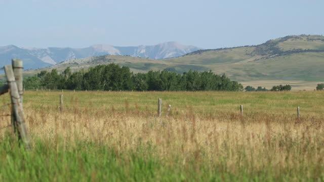 landscape. field, ridgeline and mountain. - wiese stock videos & royalty-free footage