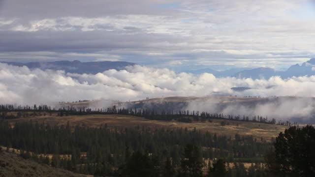 landscape from grand loop road, yellowstone national park, wyoming - 荒野点の映像素材/bロール
