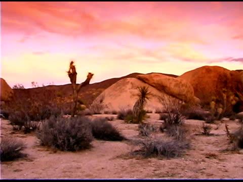 landscape in desert, joshua tree national park, california - 熱帯の低木点の映像素材/bロール