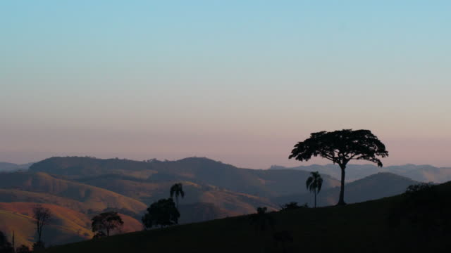 landscape in mantiqueira mountains with big tree - ecoturismo video stock e b–roll
