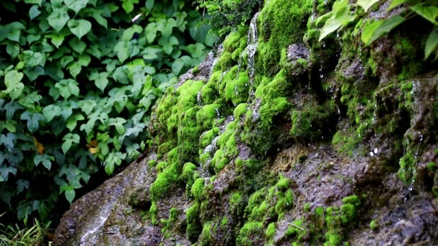 landscape in the mountain in the southern part of okinawa - spring flowing water stock videos & royalty-free footage