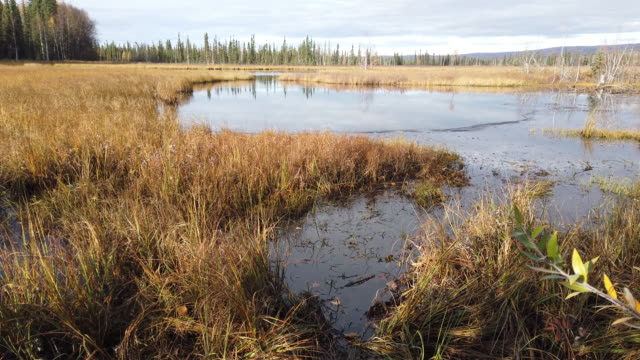 landscape is seen on september 17, 2019 near fairbanks, alaska. permafrost which is found to some extent beneath nearly 85 percent of alaska has been... - アラスカ点の映像素材/bロール