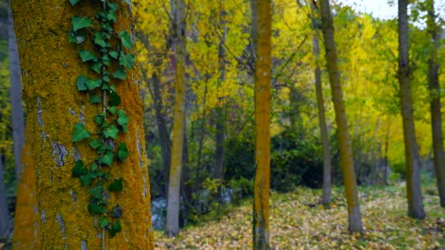 vídeos de stock, filmes e b-roll de landscape near the river in urbasa range - trepadeira