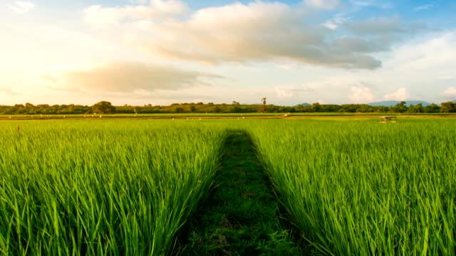 Paysage d'un champ vert magnifique au coucher du soleil