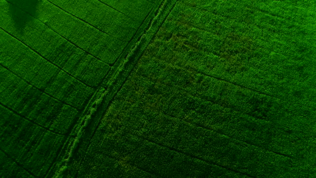 vídeos de stock, filmes e b-roll de paisagem de um campo verde lindo tiro de vista superior do zangão. - arroz alimento básico
