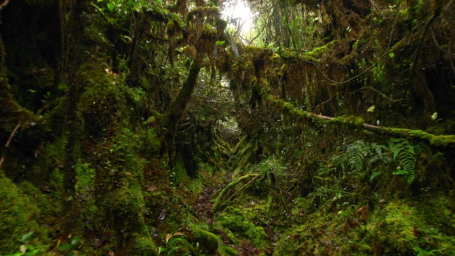 landscape of a dense jungle in mulu, island of borneo - tropical rainforest stock videos & royalty-free footage