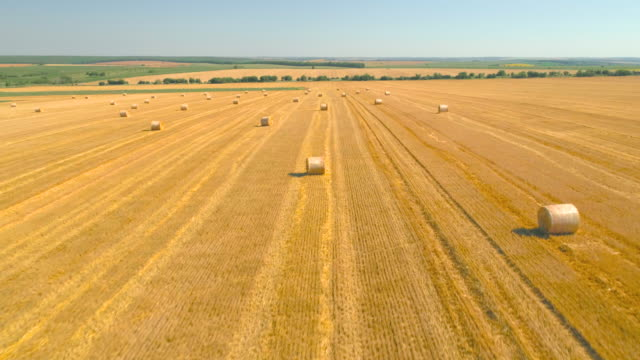 landscape of a large hay field with numerous straw bales, slow motion - bale stock videos & royalty-free footage