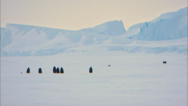 landscape of antarctica and back of female emperor penguins leaving to find food - female animal stock videos & royalty-free footage
