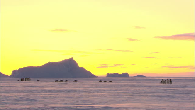 landscape of antarctica at sunset and penguins - antarctica sunset stock videos & royalty-free footage