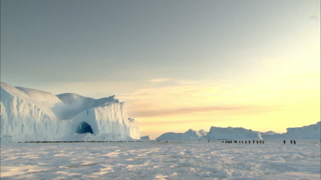 Landscape of Antarctica at sunset and penguins