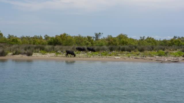 vídeos y material grabado en eventos de stock de landscape of camargue - cuatro animales