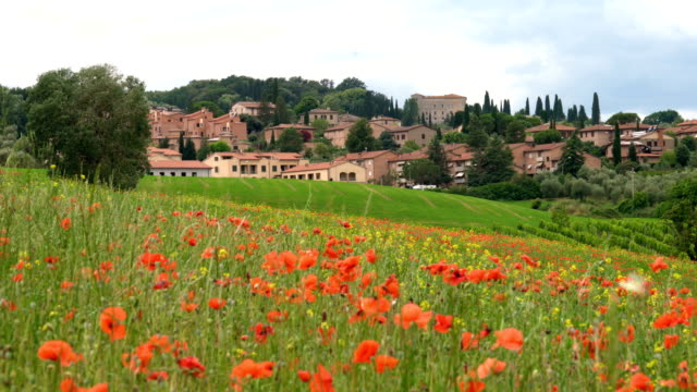 landscape of castiglione d'orcia. - wildflower stock videos & royalty-free footage