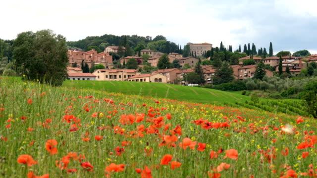 vidéos et rushes de paysage de castiglione d'orcia. - fleur sauvage