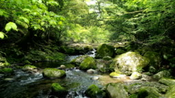 landscape of clear stream