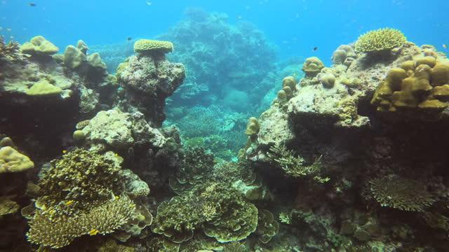 stockvideo's en b-roll-footage met landschap van het duiken onder de zee - sunny