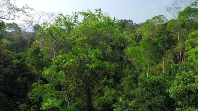 vídeos y material grabado en eventos de stock de landscape of fig trees and forest in sumatra island, indonesia - isla de sumatra