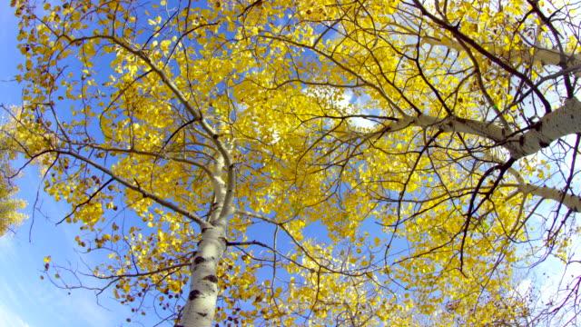 vídeos y material grabado en eventos de stock de landscape of jackson hole - árbol de hoja caduca