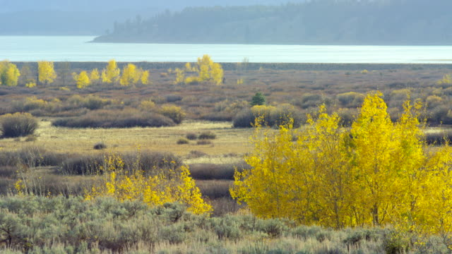 landscape of jackson hole - grand teton national park stock videos and b-roll footage