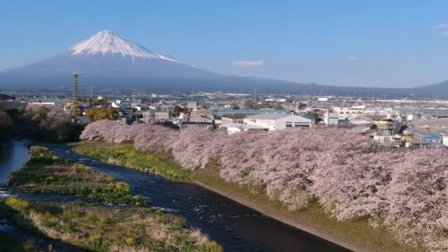 Landscape of Japan with Mountain Fuji and cherry blossom sakura at Ryuganbuchi, Shizuoka, Japan.