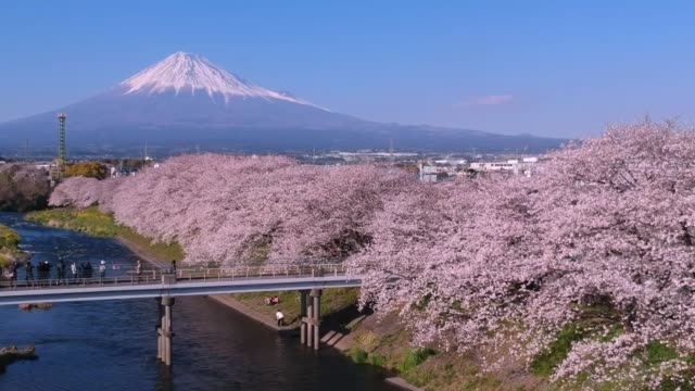 landscape of japan with mountain fuji and cherry blossom sakura at ryuganbuchi, shizuoka, japan. - japan stock videos & royalty-free footage