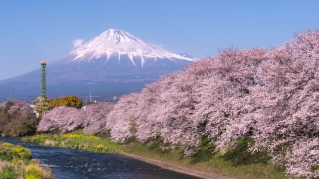 landscape of japan with mountain fuji and cherry blossom sakura - blossom stock videos & royalty-free footage
