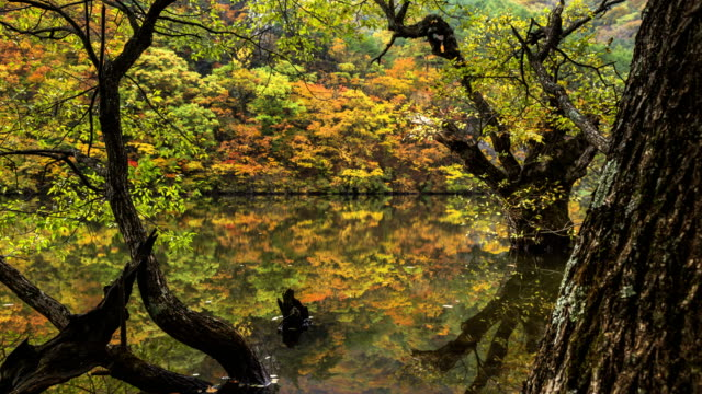 landscape of jusanji pond (small reservoir located in juwangsan national park) (popular tourist destinations) and reflection of trees on the water in autumn season in cheongsong, gyeongsangbuk do - völlig lichtdurchlässig stock-videos und b-roll-filmmaterial