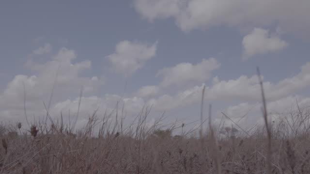 landscape of kenya / kenya, africa - arid stock videos & royalty-free footage