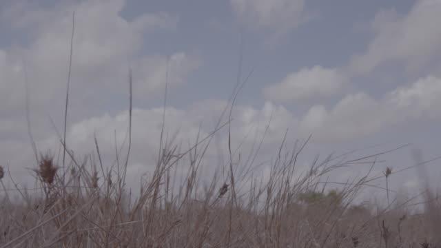 landscape of kenya / kenya, africa - ebene stock-videos und b-roll-filmmaterial