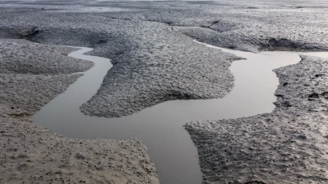 stockvideo's en b-roll-footage met landscape of mud flat in the western sea at high tide - getijde