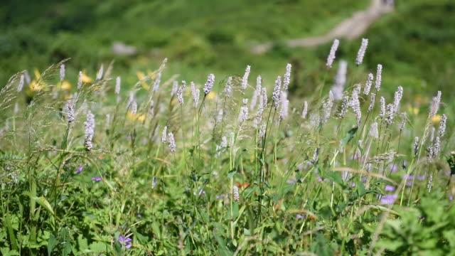 landscape of nogodan peak in jirisan mountain / jeollanam-do, south korea - wildflower stock videos & royalty-free footage