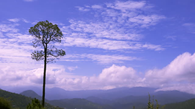 landscape of solan, himachal pradesh, india - pinaceae stock videos & royalty-free footage