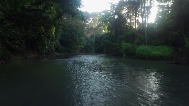 vídeos y material grabado en eventos de stock de landscape of stream and forest in mount halimun salak national park, indonesia - java