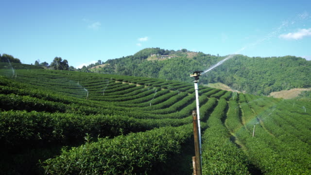 landscape of tea plantation of mae salong at thailand. - north stock videos & royalty-free footage