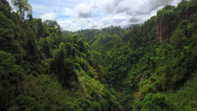landscape of the rainforest in sumatra island, indonesia - indonesia stock videos & royalty-free footage