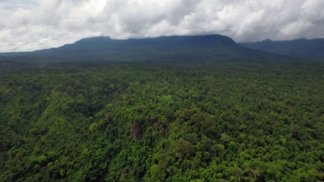 landscape of the rainforest in sumatra island, indonesia - rainforest stock videos & royalty-free footage