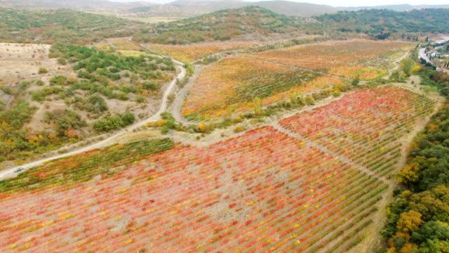 秋の色とりどりのブドウ園が付いている谷の航空写真: 風景 - クワッドコプター点の映像素材/bロール