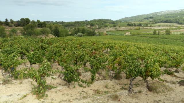 Paysage de vignoble en France