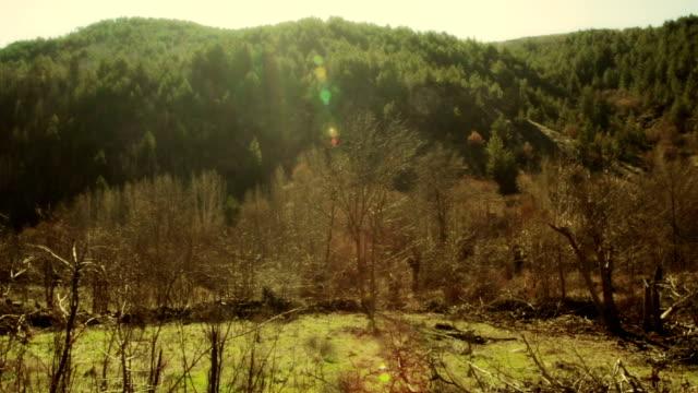 landscape, old village forest