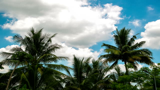 landscape palm tree. - palm leaf stock videos & royalty-free footage