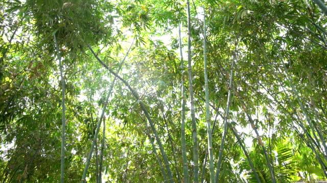 landschaftspflanze von bambusbaum im tropischen regenwald - bamboo plant stock-videos und b-roll-filmmaterial