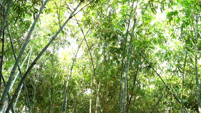 landschaftspflanze aus bambusbaum - bamboo plant stock-videos und b-roll-filmmaterial