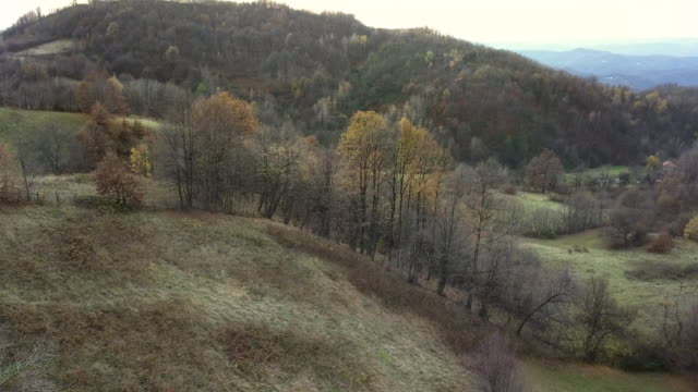 landscape seen from above - bare tree stock videos & royalty-free footage